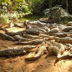 Visit the Crocodile Farm opp. the Resort
