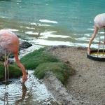 flamingos, ducks and a parrot are on site