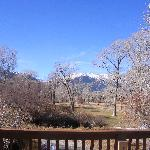 Foto di Buffalo Peaks Bed and Breakfast
