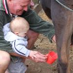  The owner helping our baby to milk the cow
