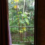 View from Room. Rain Forrest