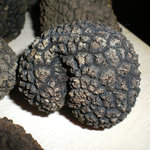  Truffle