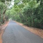 Road to Auroville