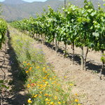 Chilean Wine Lovers Private Tours