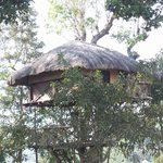 tree house in hotel