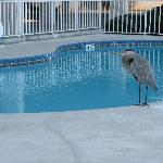  Pool Guest