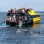 Dolphin Discoveries - Swim with Dolphins cruise