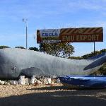  Whale at the complex