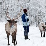 A winter walk with the reindeer.