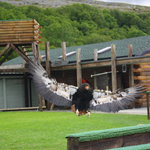 Burren Birds of Prey Centre