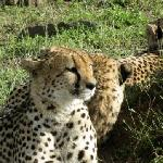 Voi Wildlife Lodge Foto