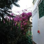 side of building with bougainvillea