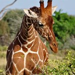 Go Kenya Tours and Safaris Day Trips
