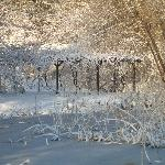  winter grape arbor