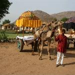 Enjoy Camel Safari Rides and Evening Dances