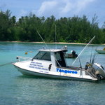 Captain Moko's Fishing Charters