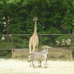 Zoo Brno