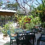 "The patio - a great place for flowers, birds and ""happy hour"""