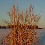  Tymparon Inn summer grasses become winter wonderland