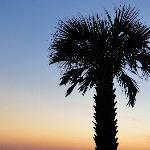 Bilde fra Holiday Inn Express Orange Beach-On The Beach