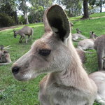 Lone Pine Koala Sanctuary