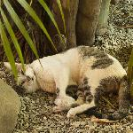 Mamacita the cat at Casa Coba