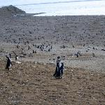 Penguins as far as the eye can see