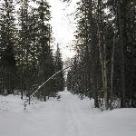 One of the many hiking/ski trails on the property.