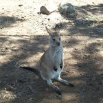 Bonorong Wildlife Sanctuary Foto