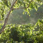 Early morning view of NATURE, taken from the balcony of our room