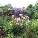  Welbeck Cottage garden