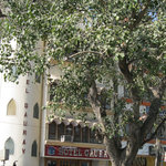  Hotel Gaurav