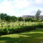 Foto de Estates at Turtle Bay