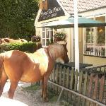 New Forest Pony comes to tea
