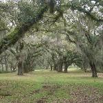 Photo de Greenwood Plantation