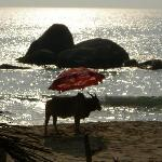 Rama Resort - Agonda Beachの写真