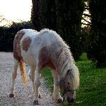 il cavallo