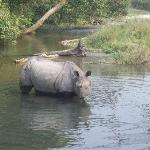 a relaxed rhinos on ur ways