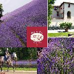 Podere dell'Arco Country Charmeの写真