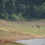 Periyar Lake Boat Ride - Sambar