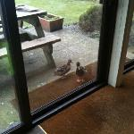 Even the ducks welcomed us when we checked in.