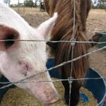  Pat a pig or a pony! (or one of the many other beasts!)