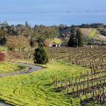  HCG vineyard view