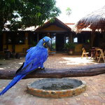 Araras Pantanal Ecolodge