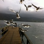 feeding the birds on the Pullwood jetty