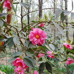 South Carolina Botanical Gardens