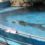 Dolphin Exhibit