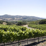 Foley Estates Vineyard