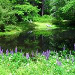 Fresh pond with lupines and frogs