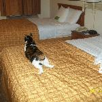  Cat on the bed. :) She felt right at home!
